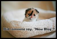 new-blog-kitten