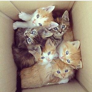 166925-Kittens-In-A-Box